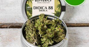 Cannabis Legale - Le Molte Soluzioni Presenti sul Web.